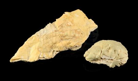 Lot # 726 - 2 Krayt Dragon Bone Pieces